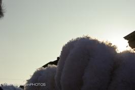 mardi-gras-2011-6588