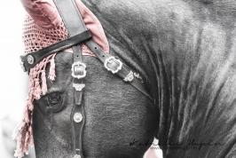 nhupin-chevaux-0057