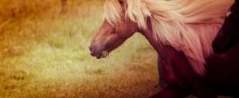 nhupin-chevaux-0127