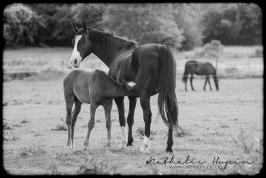 nhupin-chevaux-0136