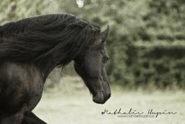 nhupin-chevaux--11