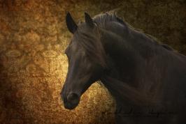nhupin-chevaux--12