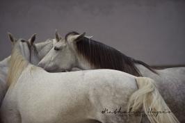 nhupin-chevaux-1299