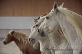 nhupin-chevaux-1375