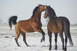 nhupin-chevaux-1398