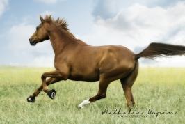 nhupin-chevaux--14