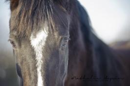 nhupin-chevaux-1487