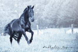 nhupin-chevaux--15