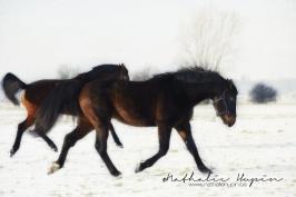 nhupin-chevaux--16