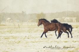 nhupin-chevaux--17