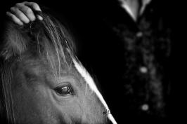 nhupin-chevaux--18