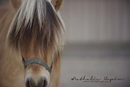 nhupin-chevaux-1952