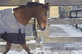 nhupin-chevaux-2-2