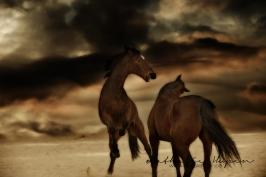 nhupin-chevaux--20