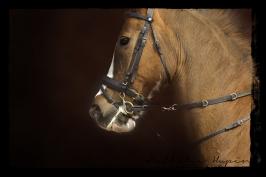 nhupin-chevaux--22