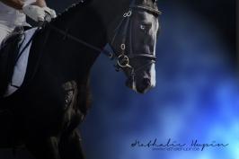 nhupin-chevaux--23
