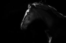 nhupin-chevaux--25