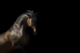 nhupin-chevaux--27