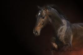 nhupin-chevaux--28