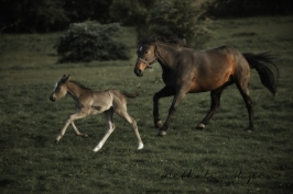 nhupin-chevaux--40