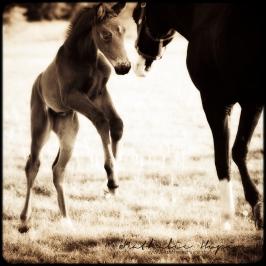 nhupin-chevaux--41
