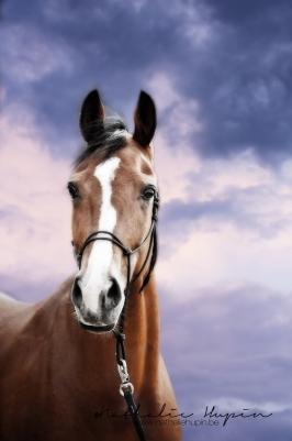 nhupin-chevaux--42