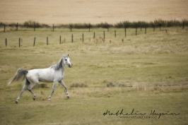 nhupin-chevaux--44