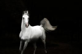 nhupin-chevaux--45