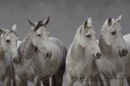 nhupin-chevaux--48