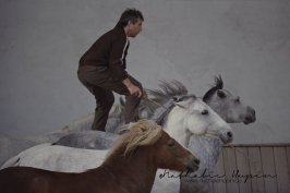 nhupin-chevaux--49