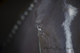 nhupin-chevaux-4991