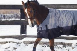 nhupin-chevaux--51