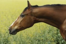 nhupin-chevaux--52