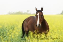 nhupin-chevaux--53