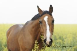 nhupin-chevaux--54