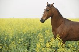 nhupin-chevaux--55