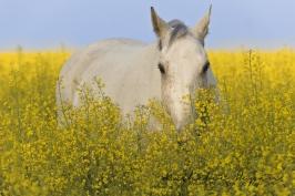 nhupin-chevaux--56