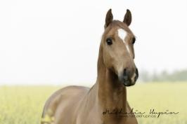 nhupin-chevaux--59