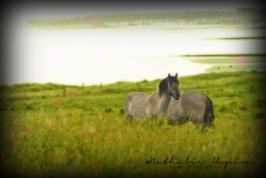 nhupin-chevaux--6