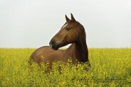 nhupin-chevaux--60