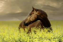 nhupin-chevaux--61