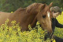nhupin-chevaux--62