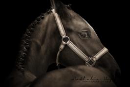 nhupin-chevaux--64