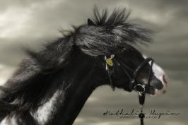nhupin-chevaux--65