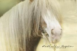 nhupin-chevaux--66