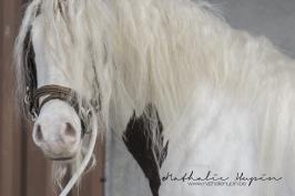 nhupin-chevaux-6693