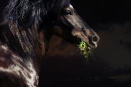 nhupin-chevaux--67