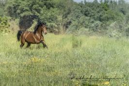 nhupin-chevaux--68