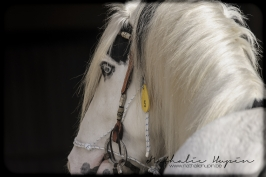 nhupin-chevaux-6841