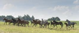 nhupin-chevaux-6871